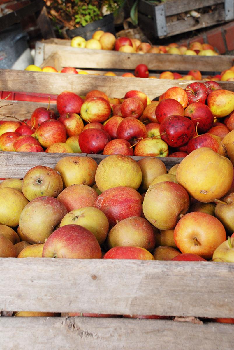 Äpfel - Foto: Andrea Knura