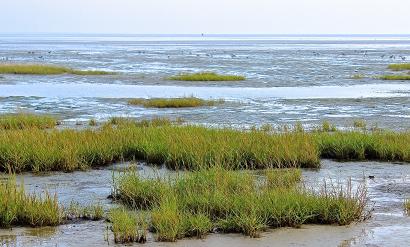 Faszination Wattenmeer: Erleben Sie die Gezeiten bei Ihrem Besuch im NAKUK