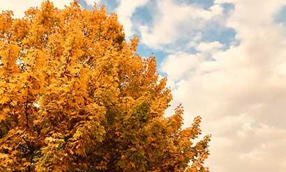basenfasten im Herbst